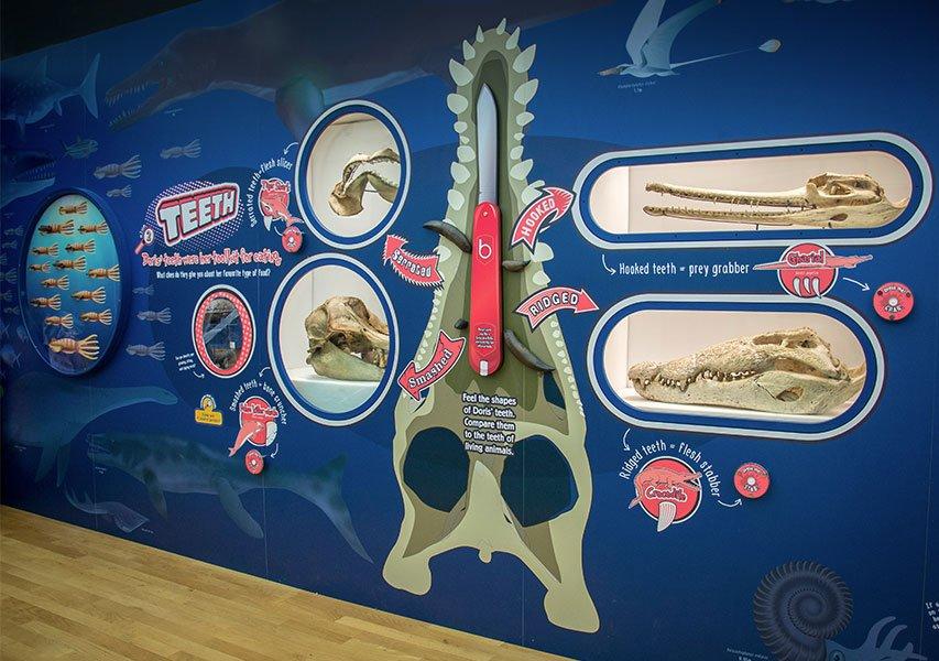 Bristol Design Pliosaurus Exhibition Photo5